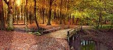 Herbstreise in den Harz