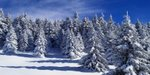 Schneetage in Bad Sachsa